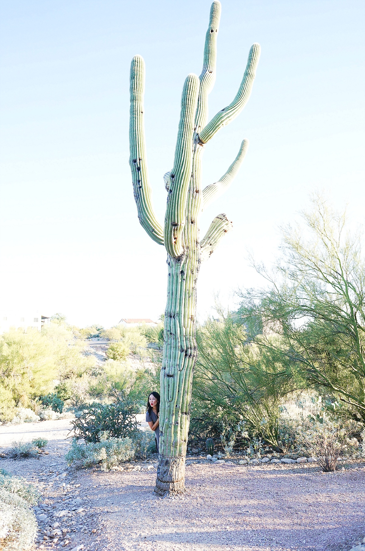 westward-look-tucson_0133
