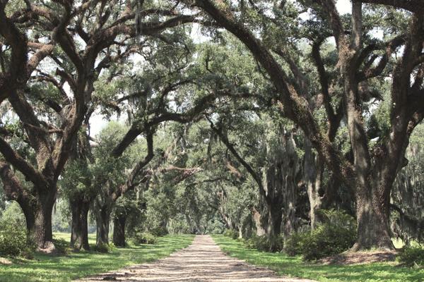 Dixieland: Southern Sights