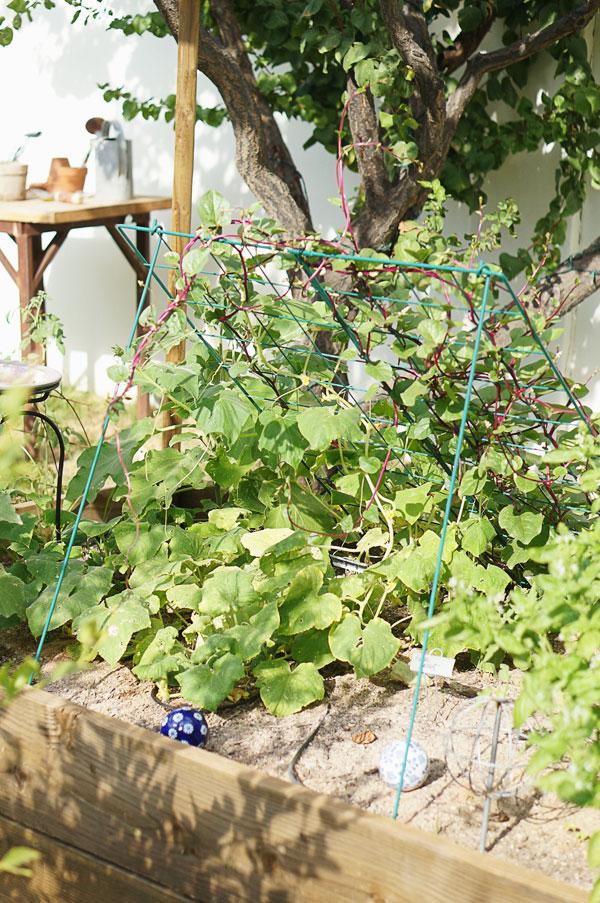 backyard-phoenix-garden-urban-farming-120