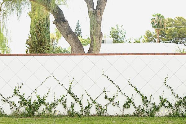 backyard-phoenix-garden-urban-farming-122