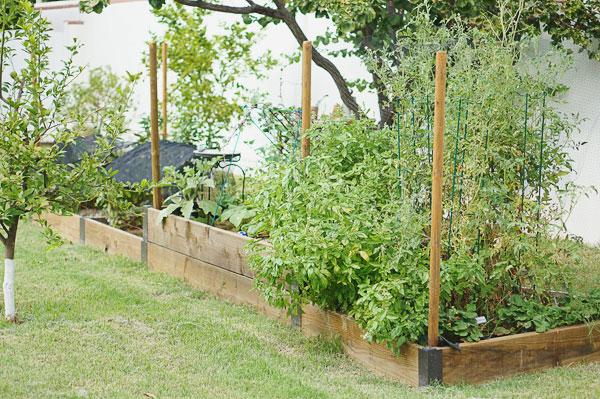 backyard-phoenix-garden-urban-farming-132