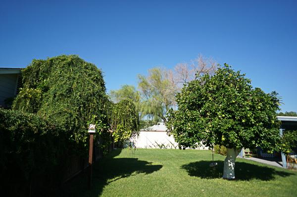 backyard-phoenix-garden-urban-farming-tree-removal-115
