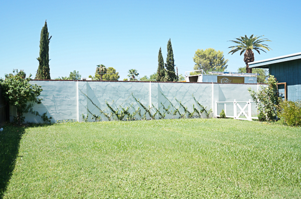 backyard-phoenix-garden-urban-farming-tree-removal-120