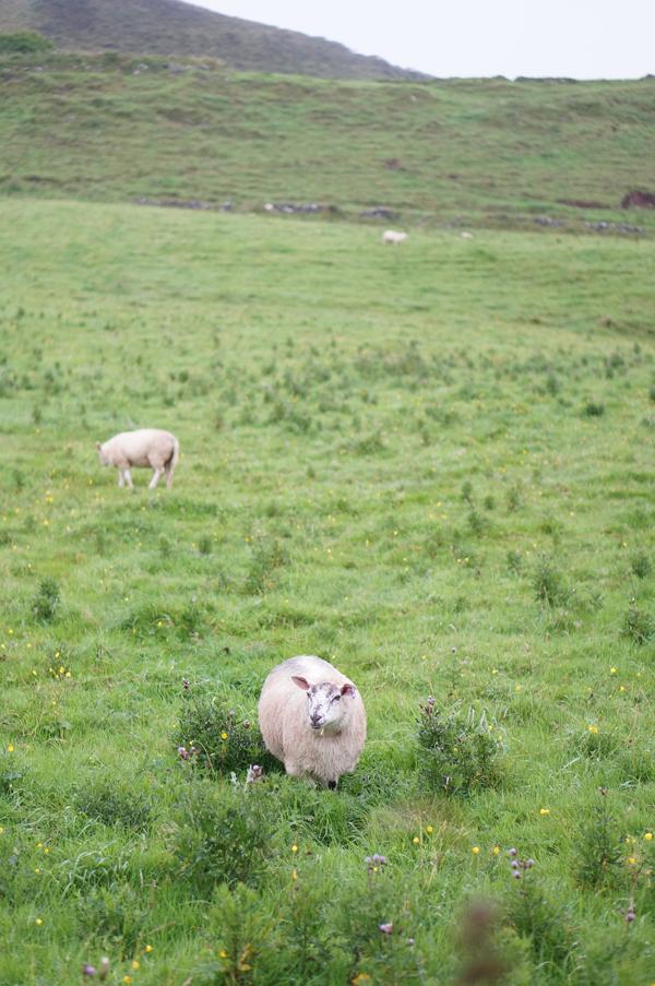 ireland-travel-blogger-republic-of-ireland-northern-ireland-castle-tour-tips-photos023