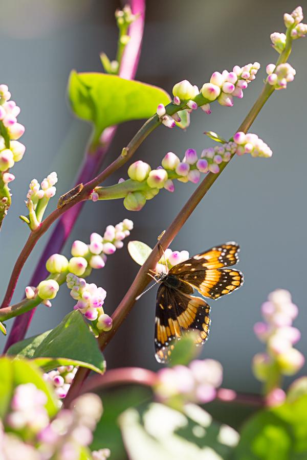 butterfly-garden-112