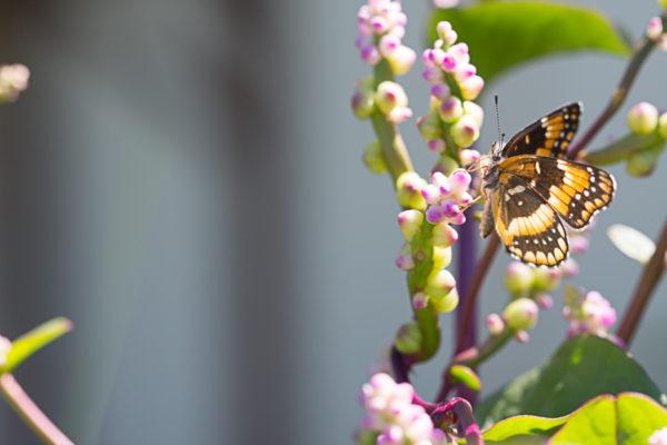 butterfly-garden-113