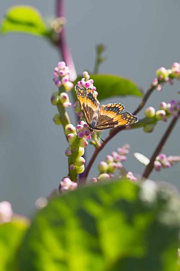 butterfly-garden-114