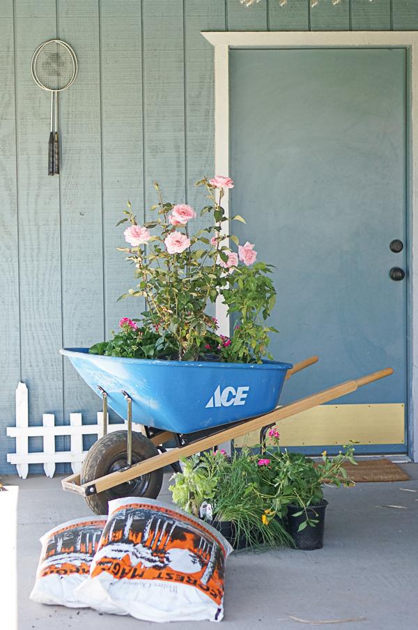 garden-backyard-gardening-flowers-nursery-blogger-111