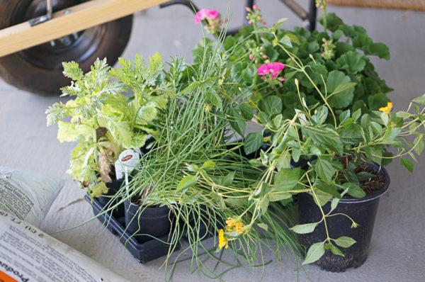 garden-backyard-gardening-flowers-nursery-blogger-112