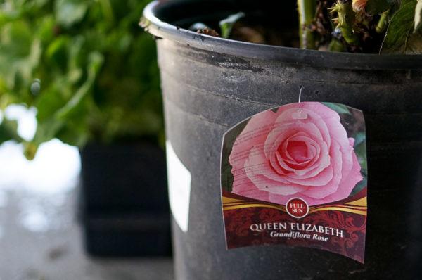 garden-backyard-gardening-flowers-nursery-blogger-116