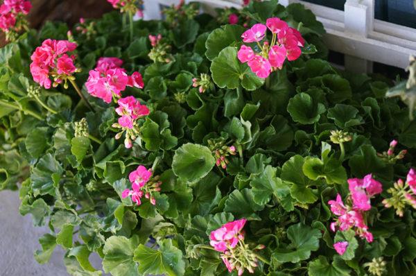 garden-backyard-gardening-flowers-nursery-blogger-118