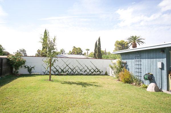 garden-backyard-gardening-flowers-phoenix-nursery-blogger-114