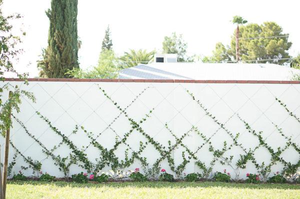 garden-backyard-gardening-flowers-phoenix-nursery-blogger-115