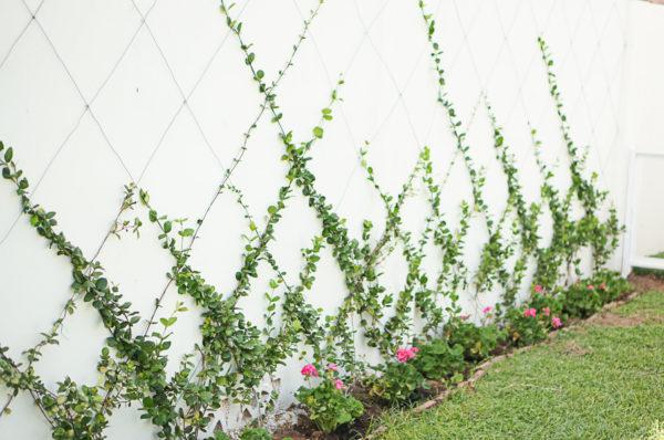 garden-backyard-gardening-flowers-phoenix-nursery-blogger-116