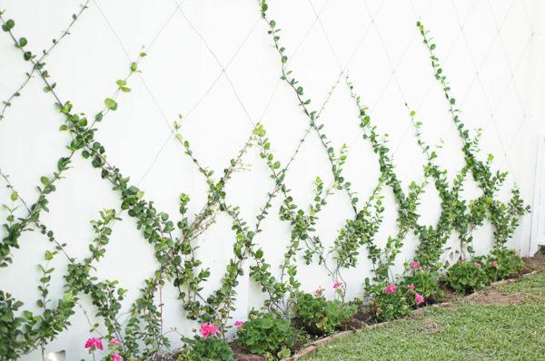 garden-backyard-gardening-flowers-phoenix-nursery-blogger-117