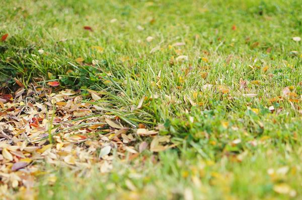 phoenix-dwarf-hotot-blogger-blog-rabbit-urban-farm-bunnies-ranch-home-004