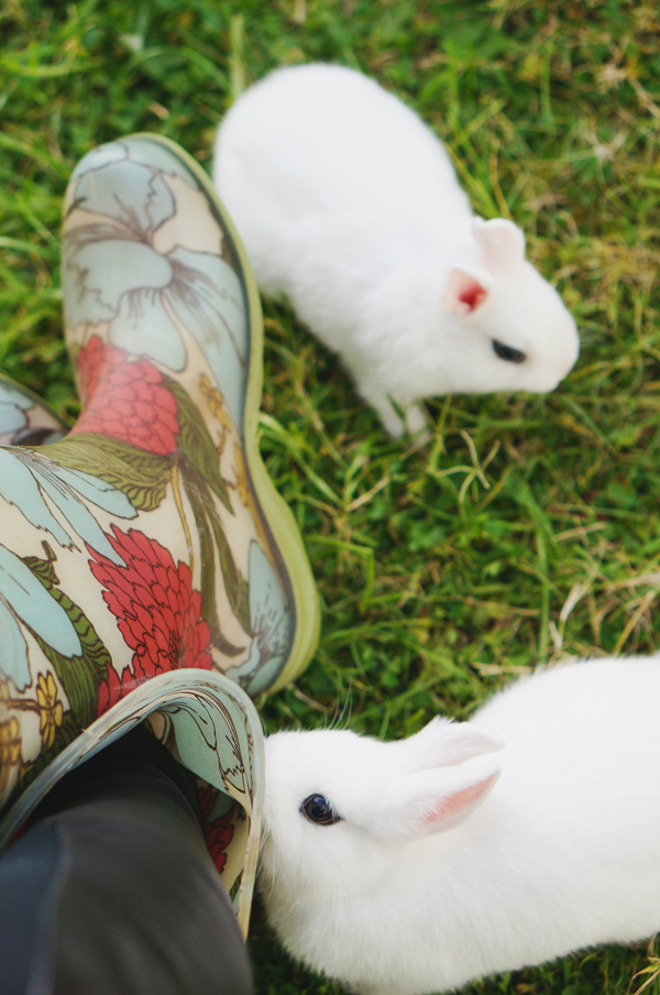 phoenix-dwarf-hotot-blogger-blog-rabbit-urban-farm-bunnies-ranch-home-008