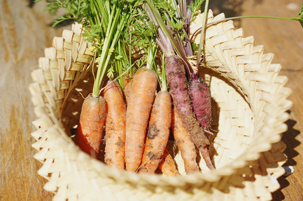 phoenix-backyard-urban-garden-farming-carrots-purple