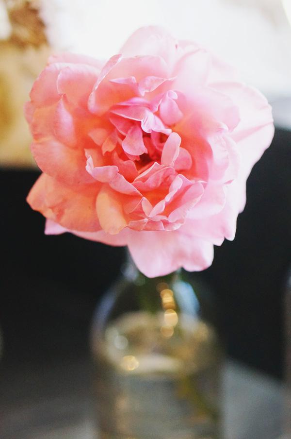 phoenix-backyard-urban-garden-farming-rose