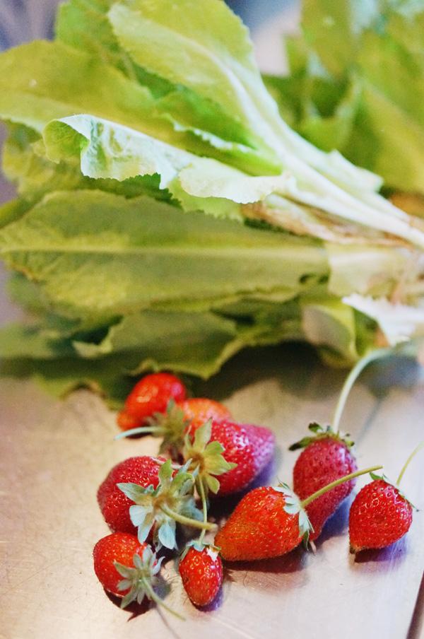 phoenix-backyard-urban-garden-farming-strawberries