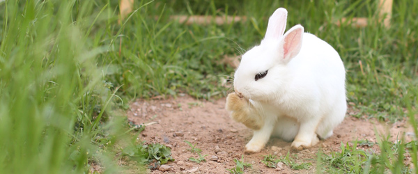 bunny-pose-1