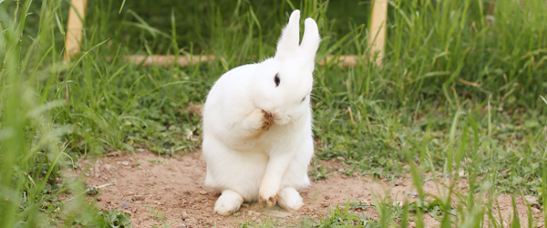 bunny-pose3