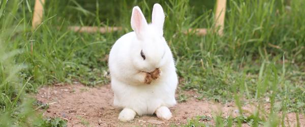 bunny-pray