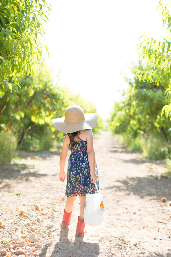 schnepf-farms-peach-orchard-fruit-shoot-picking-diana-elizabeth-photography-009