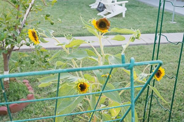 backyard-phoenix-garden-urban-116
