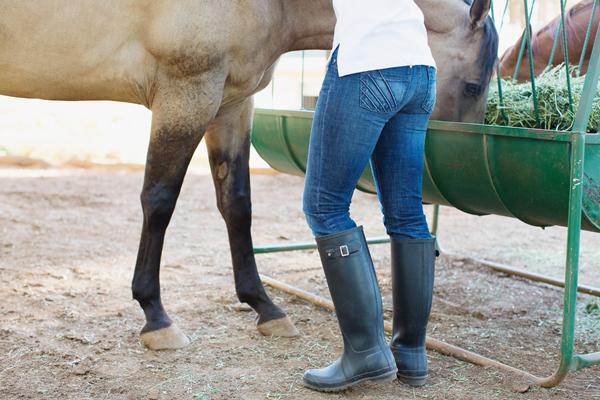 phoenix-scottsdale-arizona-california-placer-county-grass-valley-cool-western-english-equatrian-horse-equine-diana-elizabeth-photography013