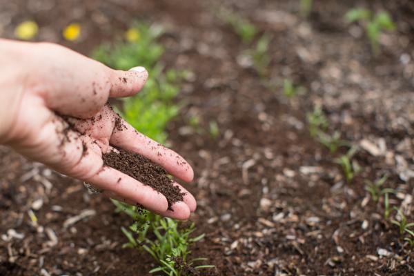 black-gold-soil-gardening-uses-urban-farming-119
