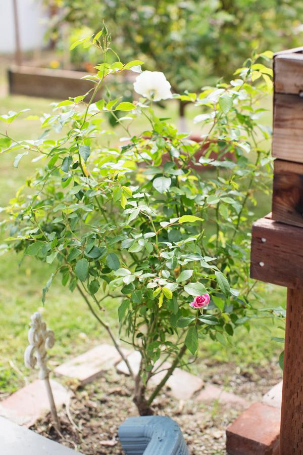 diana-elizabeth-outdoor-phoenix-arizona-garden-blogger-gardening-farming-112