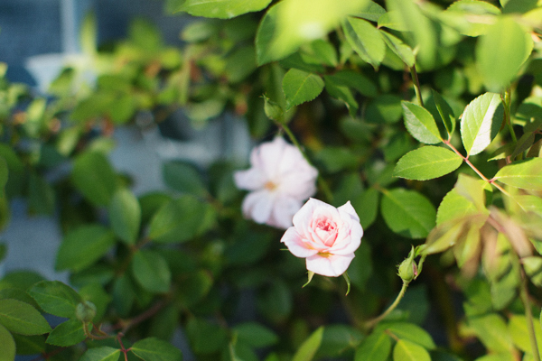 diana-elizabeth-outdoor-phoenix-arizona-garden-blogger-gardening-farming-114