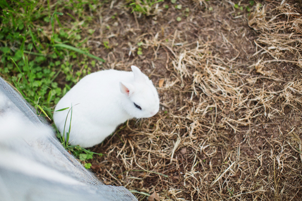 diana-elizabeth-outdoor-phoenix-arizona-garden-blogger-gardening-farming-116