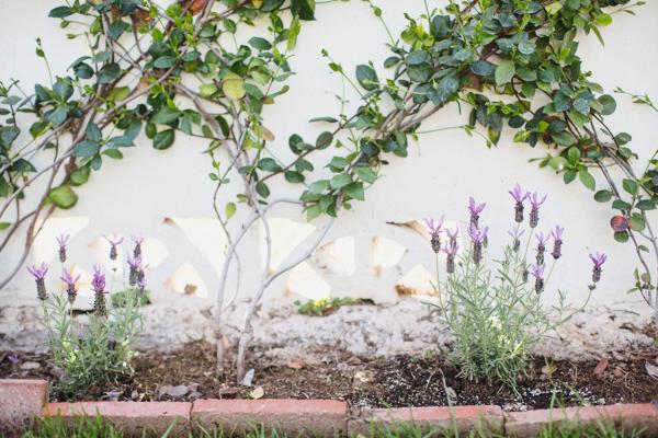 diana-elizabeth-outdoor-phoenix-arizona-garden-blogger-gardening-farming-120