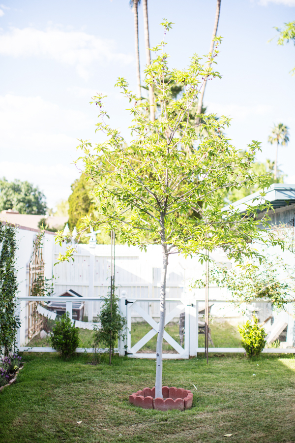 diana-elizabeth-outdoor-phoenix-arizona-garden-blogger-gardening-farming-121