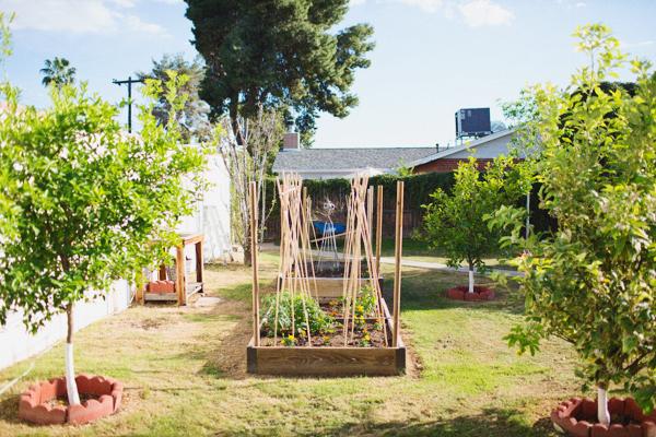diana-elizabeth-outdoor-phoenix-arizona-garden-blogger-gardening-farming-123