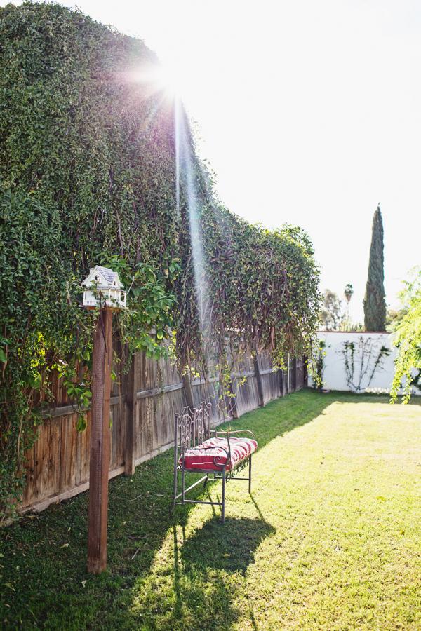 diana-elizabeth-outdoor-phoenix-arizona-garden-blogger-gardening-farming-126