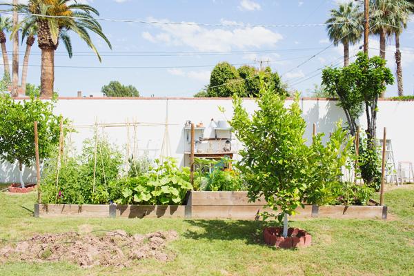 backyard-april-2015-garden-phoenix-115
