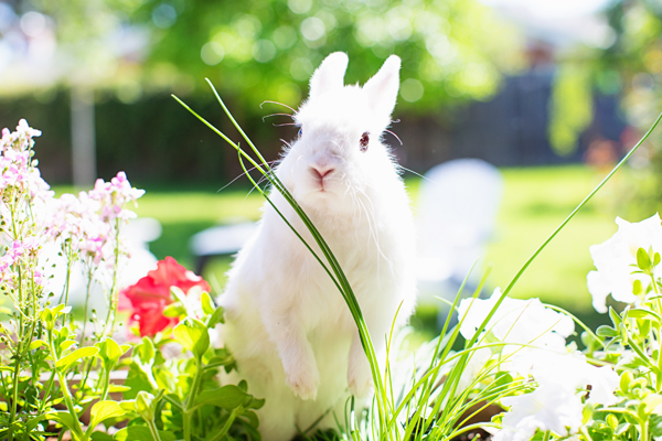 diana-elizabeth-photography-hotot-rabbit-bunny-easter-bunny-photo111