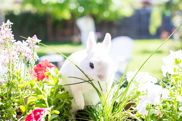 diana-elizabeth-photography-hotot-rabbit-bunny-easter-bunny-photo112