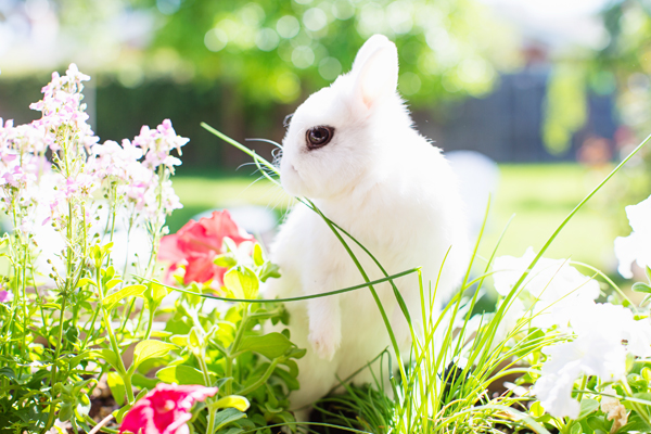 diana-elizabeth-photography-hotot-rabbit-bunny-easter-bunny-photo113