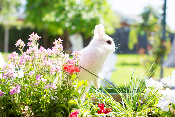 diana-elizabeth-photography-hotot-rabbit-bunny-easter-bunny-photo115