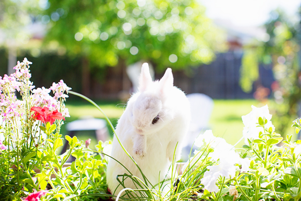 diana-elizabeth-photography-hotot-rabbit-bunny-easter-bunny-photo116