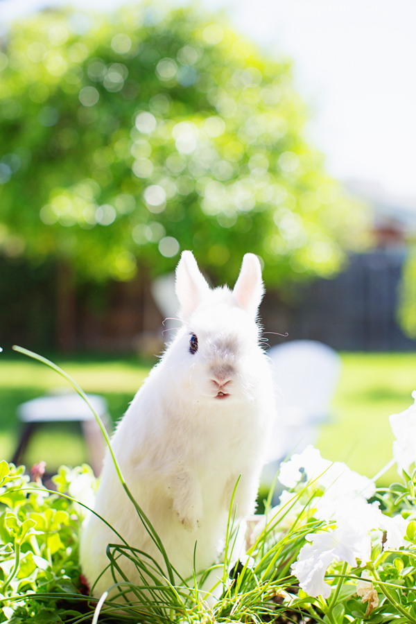 diana-elizabeth-photography-hotot-rabbit-bunny-easter-bunny-photo117