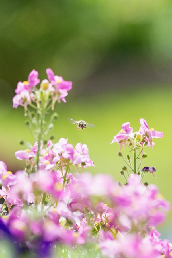 little-bee-gardener-garden-blogger-phoenix-arizona-111