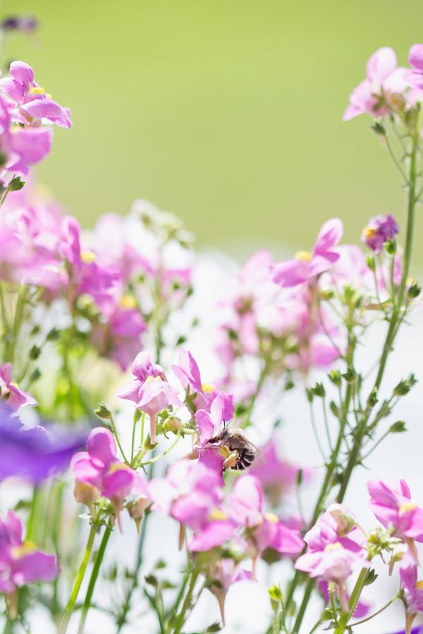 little-bee-gardener-garden-blogger-phoenix-arizona-112