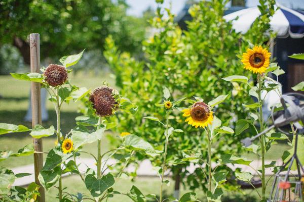 backyard-update-phoenix-garden-blogger-112