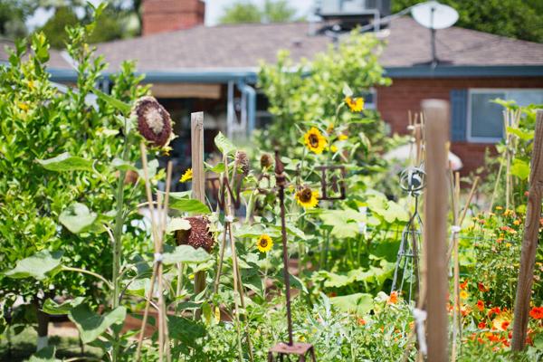 backyard-update-phoenix-garden-blogger-113