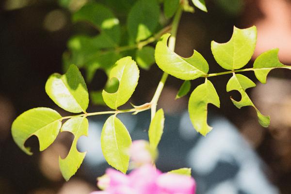 backyard-update-phoenix-garden-blogger-115